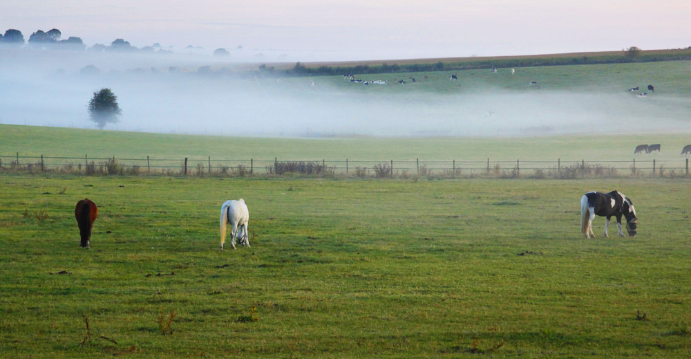 early morning mist by the paddocks