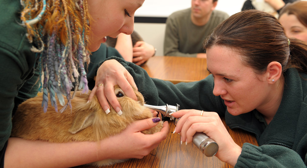 hands-on learning in Animal Management